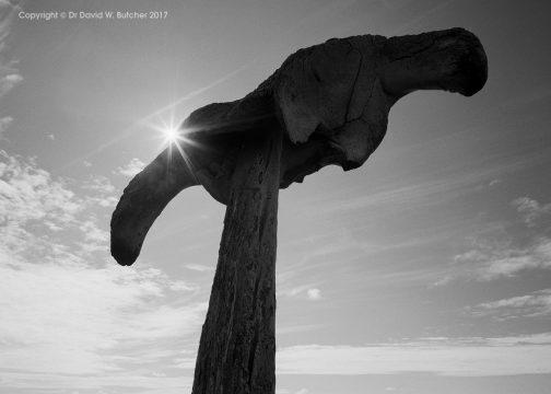 Orkney Whale Bone Silhouette, Scotland