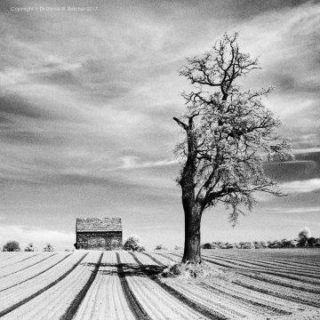Cheshire Tree and Furrows, Dunham Massey