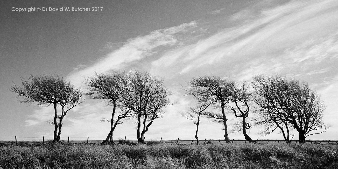 Exford Trees, Exmoor, England