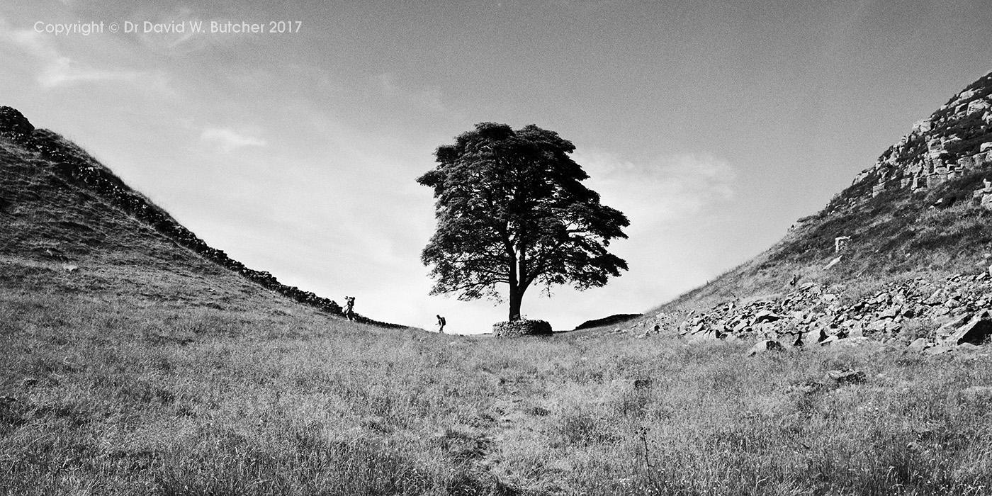 Sycamore Gap, Hadrians Wall, Northumberland