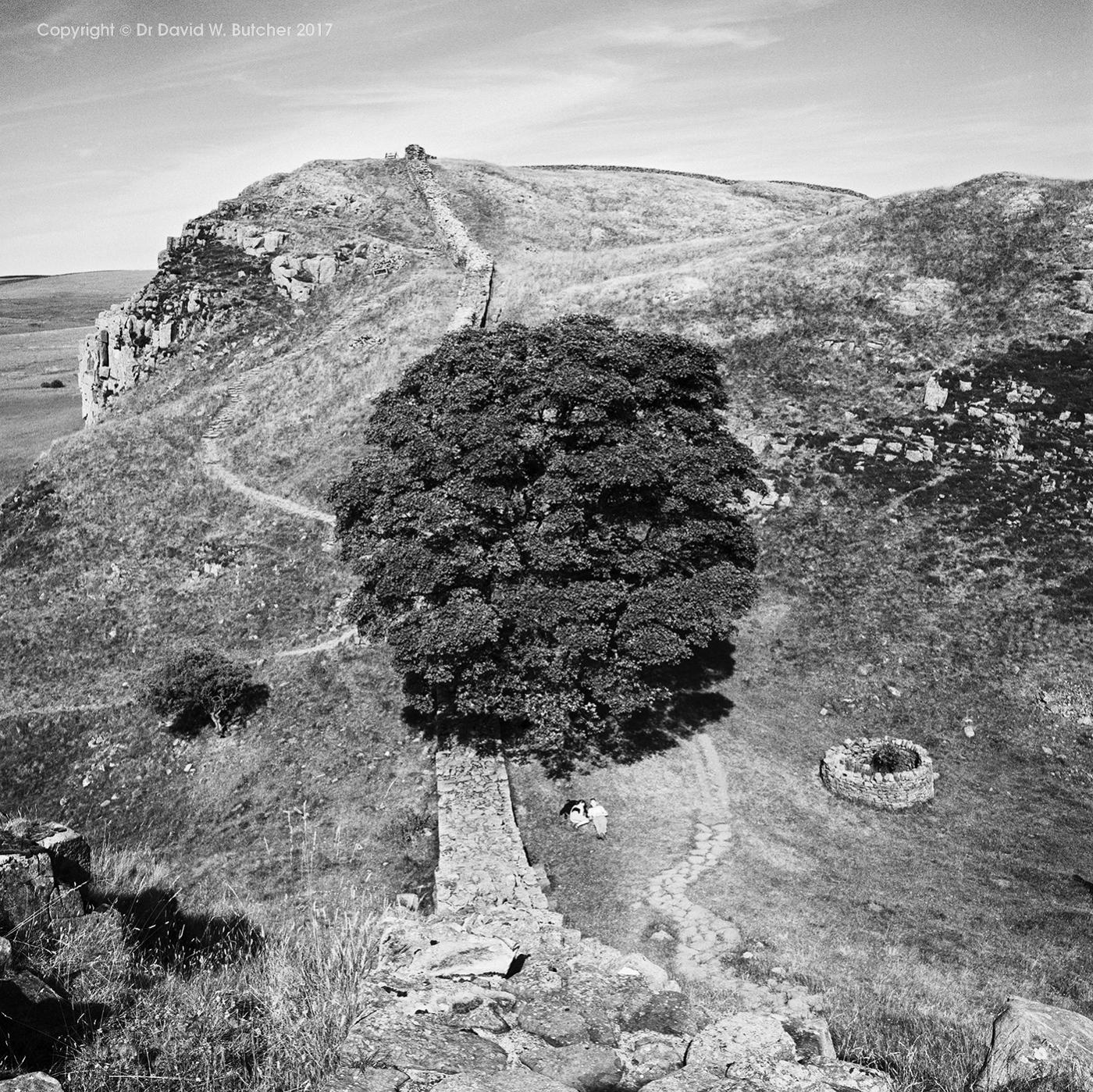 Hadrian's Wall and Sycamore Gap, Northumberland