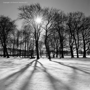 Buxton Trees in Winter, King Sterndale, Peak District
