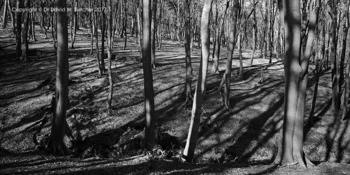 Buxton Lightwood Reservoir Woods #2, Peak District