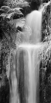 Buxton, Goyt Falls and Ferns, Peak District