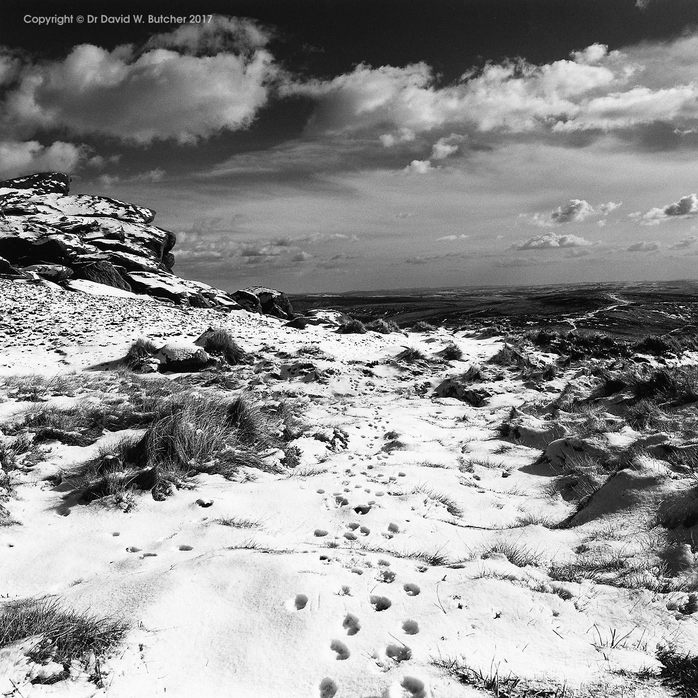 Hare Tracks on Kinderscout, Edale, Peak District