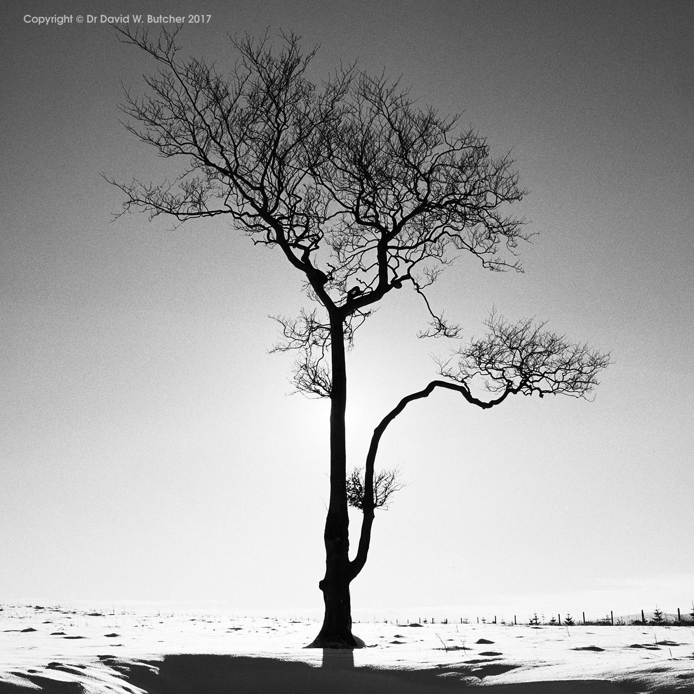 Lone Tree #1, Whaley Bridge, Peak District