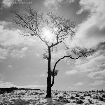 Lone Tree #2, Whaley Bridge, Peak District