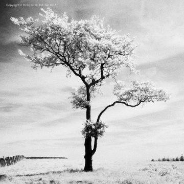 Lone Tree #3, Whaley Bridge, Peak District