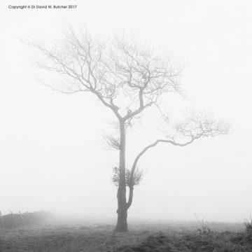 Lone Tree #4, Whaley Bridge, Peak District