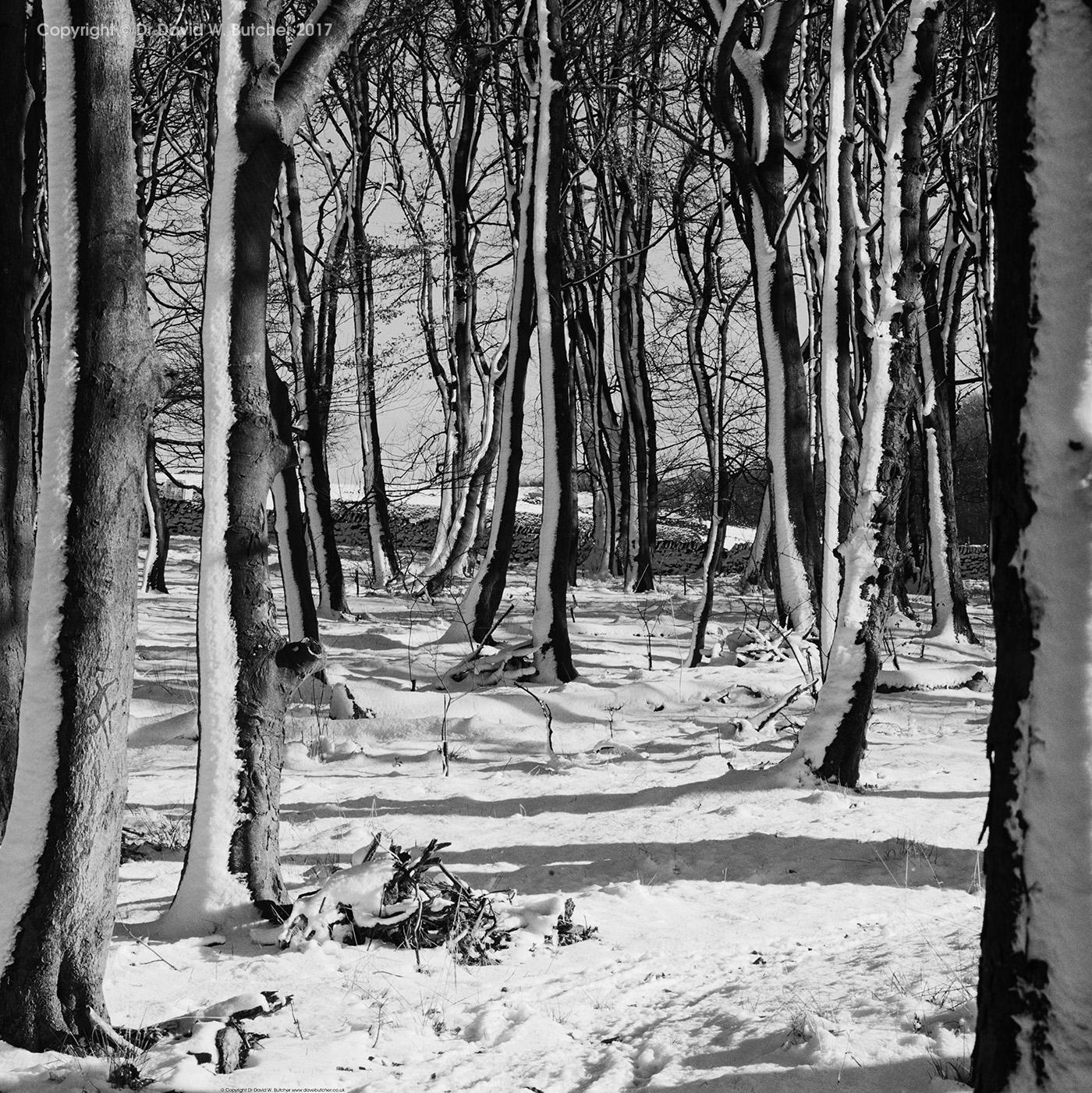 Buxton Snowy Trees, Peak District