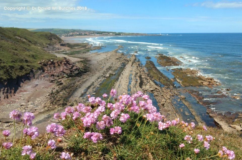 Northumberland Coast Photos Day 6 – May 2019
