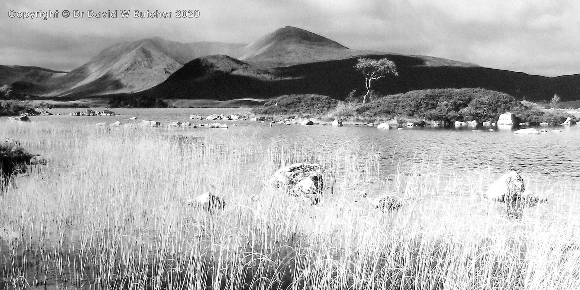 Black Mount, Lochan and Grasses, Rannoch Moor, Scotland