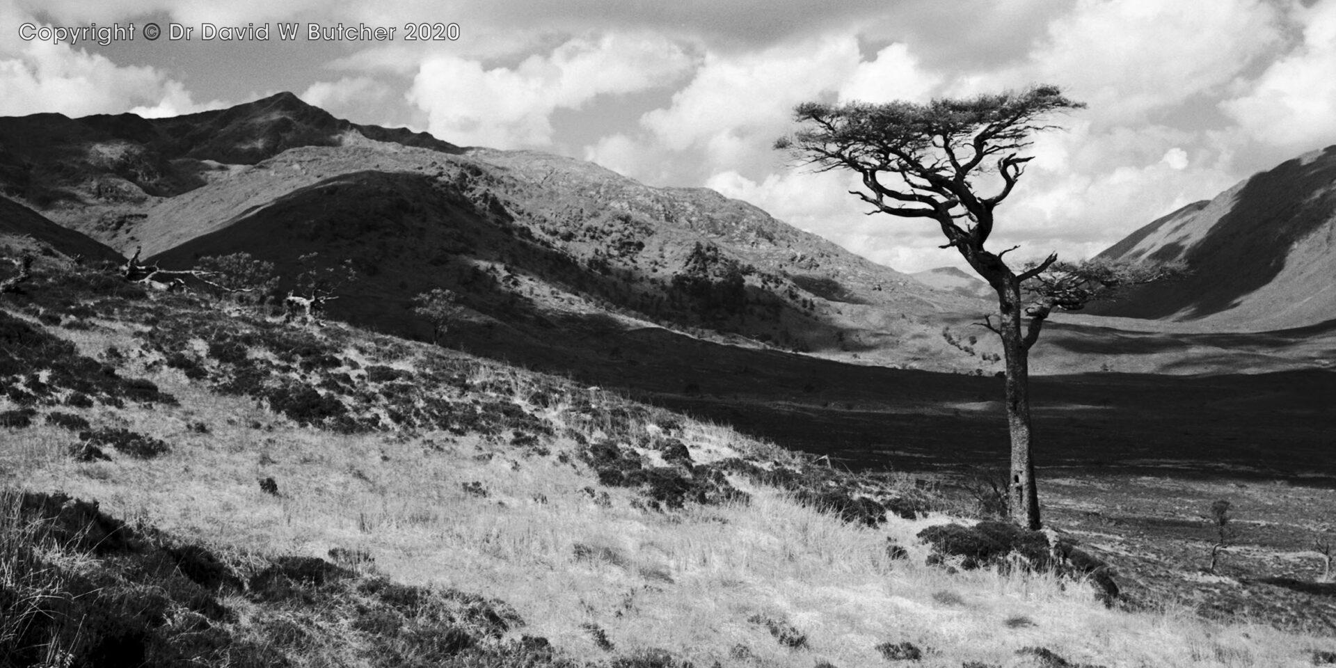 Spidean Mialach and Glen Loyne Tree, Glen Shiel, Scotland