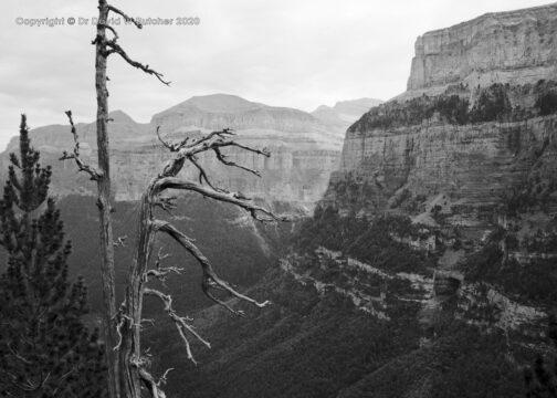 Ordesa Gorge Dead Tree, Torla, Pyrenees