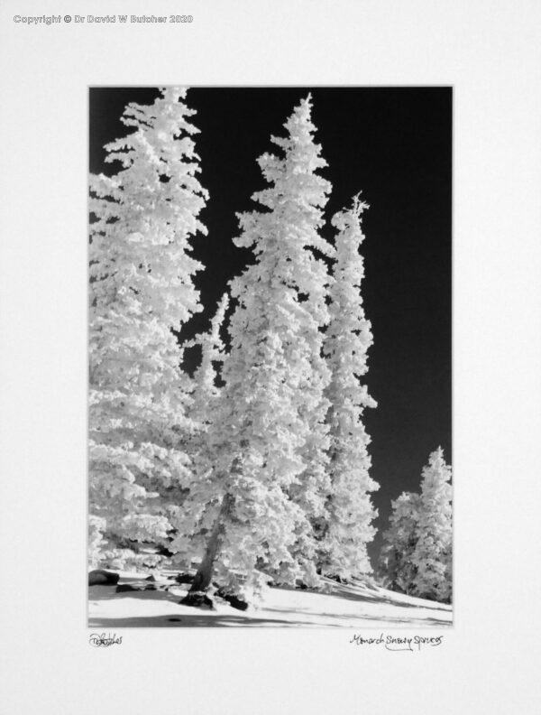 USA, Colorado Monarch Snowy Trees