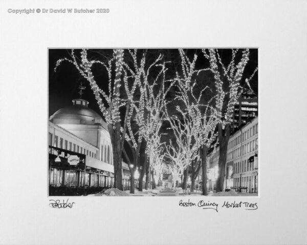 USA, Boston Quincy Market Trees at Night